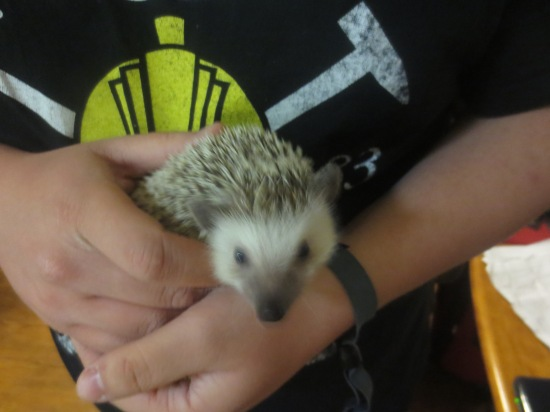 Milton the hedgehog