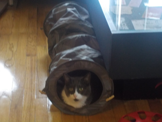 Claudius in his tunnel
