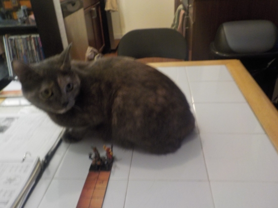 cat playing D&D